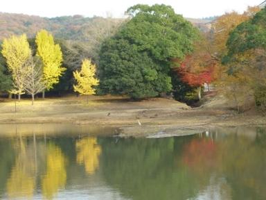 奈良大仏殿近くの池